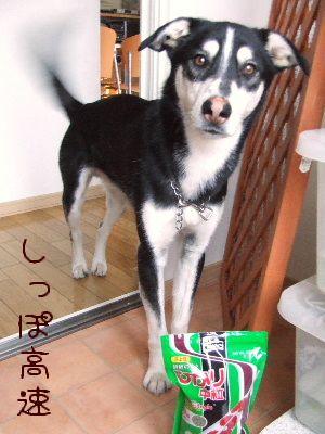 2006_0420f.jpg