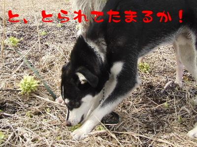 2006_0425p.jpg