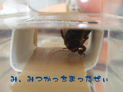 2006_0503b.jpg