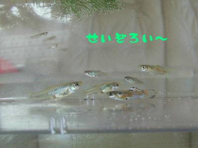 2006_0510a.jpg