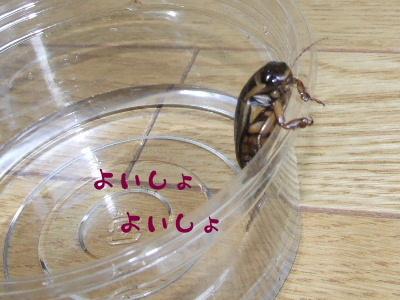 2006_0513b.jpg
