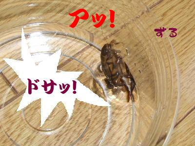 2006_0513c.jpg
