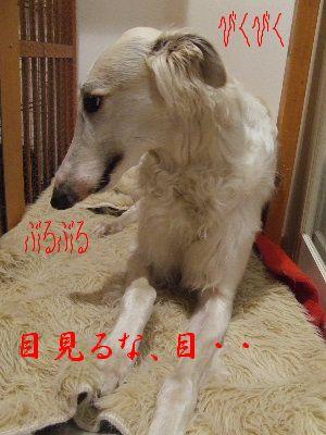 2006_0514d.jpg