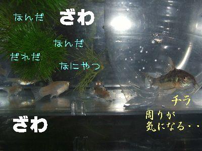 2006_0519a.jpg