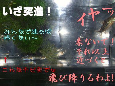 2006_0519b.jpg