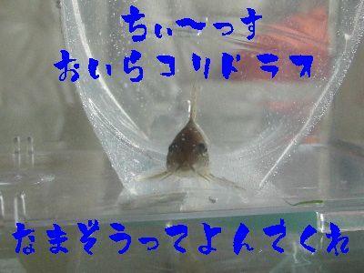 2006_0519d.jpg