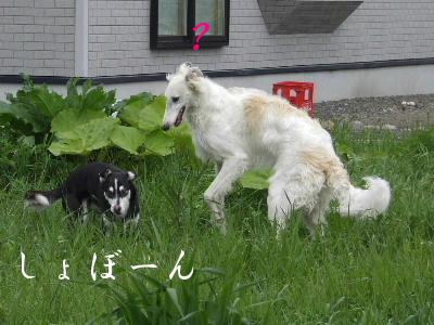 2006_0613c.jpg