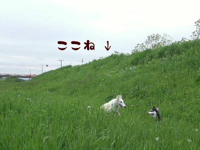 2006_0619d.jpg