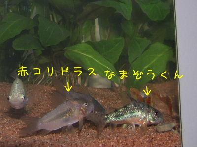 2006_0710f.jpg