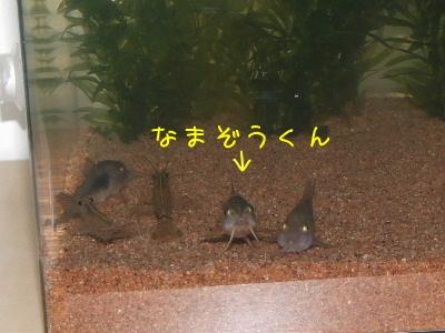 2006_0711c.jpg