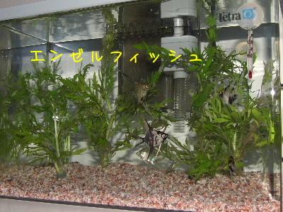 2006_0803b.jpg
