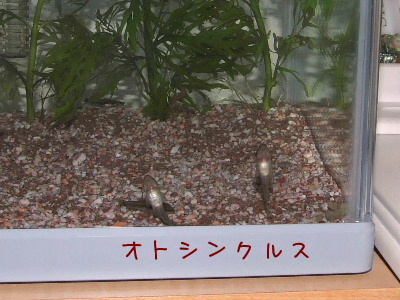 2006_0803e.jpg