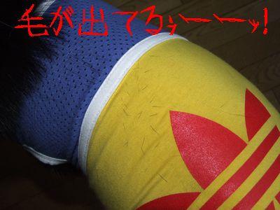 2006_0810b.jpg