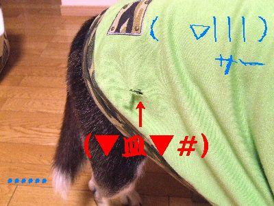 2006_0909b.jpg