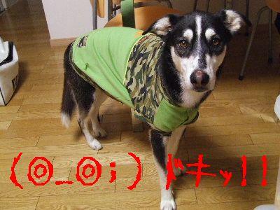 2006_0909c.jpg
