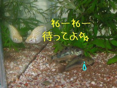 2006_0911d.jpg