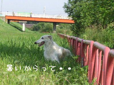 2007_0801(045).jpg