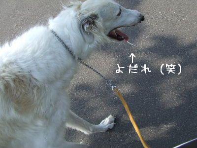 2007_0801(091).jpg