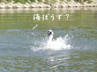2007_0812(020).jpg