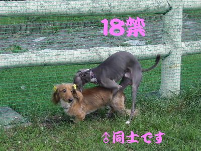 2007_0815(051).jpg