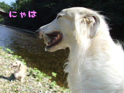 2007_0820(005).jpg