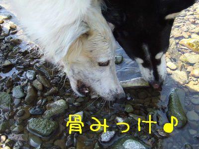 2007_0820(043).jpg
