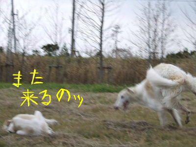 2007_1029(031).jpg