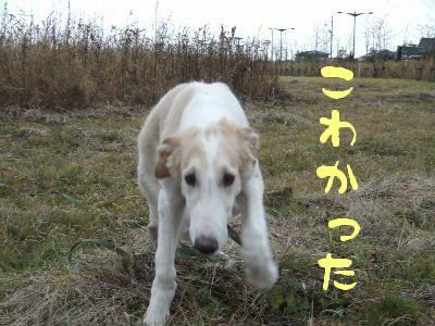 2007_1029(039).jpg