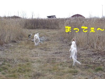 2007_1108(005).jpg