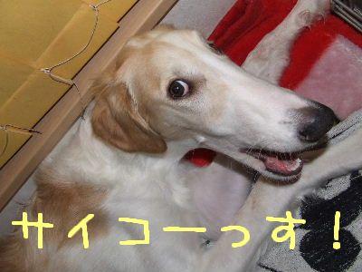 2007_1216(004)_20071220143759.jpg