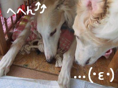 2008_0118(001).jpg
