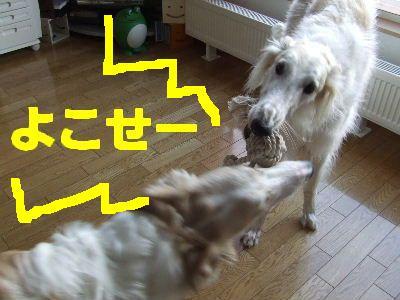 2008_0118(002).jpg