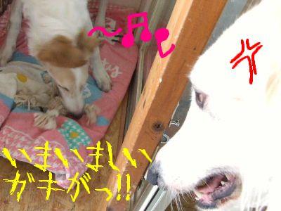 2008_0118(003).jpg