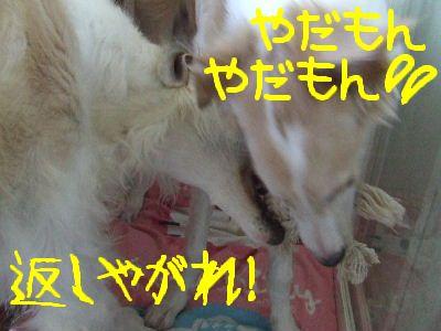 2008_0118(005).jpg
