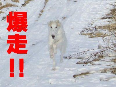 2008_0121(010).jpg