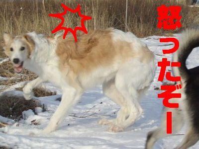 2008_0121(023).jpg