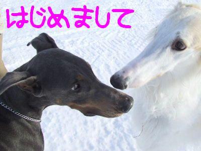 2008_0129(012).jpg