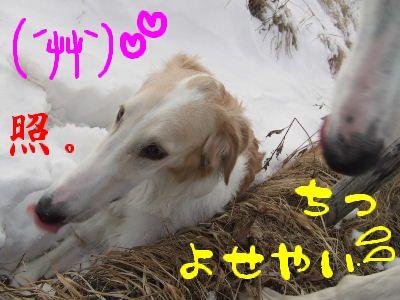2008_0203(027).jpg
