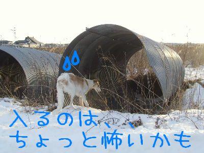 2008_0203(031).jpg