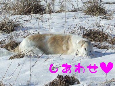 2008_0205(006).jpg