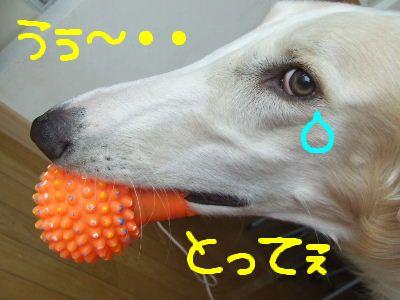 2008_0320(002).jpg