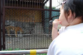 動物園 9