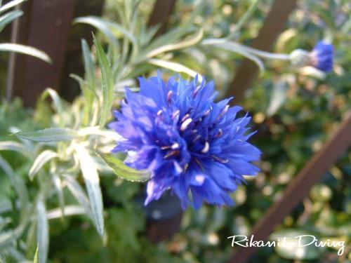 DSCF7・3何の花?2