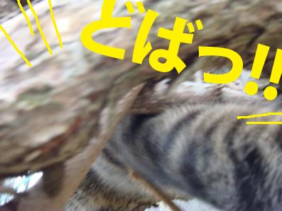 riki03-18-03.jpg