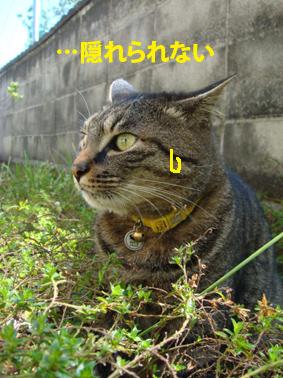 riki05-01-03.jpg