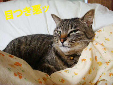 riki06-09-01.jpg