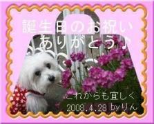 0503りんちゃんBDお礼