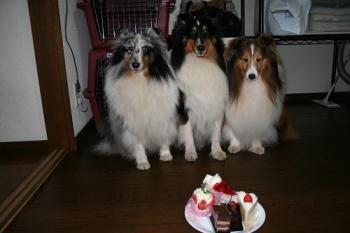 ケーキと一緒に・・・