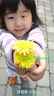 花摘みブーム