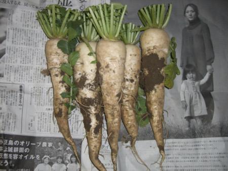 有機農野菜 010